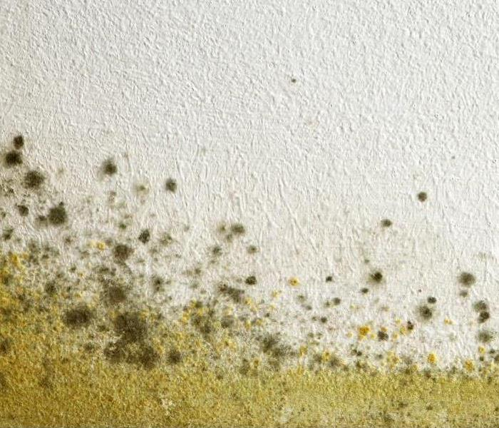 Commercial Mold After Water Damage Before