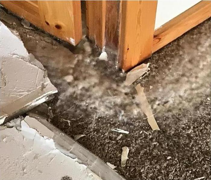 7 Places You Wouldn T Expect To Find Mold Servpro Of